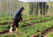 Atibaia abre vagas para curso gratuito de Olericultura Orgânica