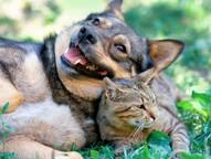 São 600 vagas gratuitas para a castração de cães e gatos