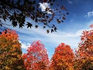 Segundo o boletim do Inmet, as temperaturas tendem a ficar mais amenas devido à entrada de massas de ar frio