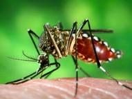 Com o término do período de férias, proprietários de imóveis não devem esquecer os cuidados para evitar a presença do mosquito