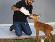Bebê cervo se perdeu da mãe e foi capturado machucado
