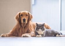 Poços Pet acontece neste fim de semana no Shopping Poços de Caldas