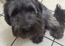 Pets desaparecidos: Toda ajuda é bem-vinda