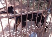 Polícia Ambiental evita morte de cachorro por maus-tratos em Atibaia