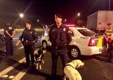 GGI Atibaia tem apoio de cães da Guarda Civil em ações especiais