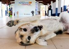 Nova sede do Direito ao Animal é inaugurada em Atibaia