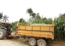 Produtores iniciam colheita de milho e comemoram boa safra