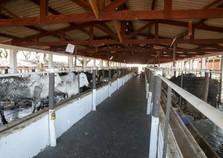Prova de confinamento de gado e programa Pró-Genética na Expo Umuarama