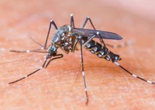 47 casos de dengue são registrados em apenas 21 dias no Paraná