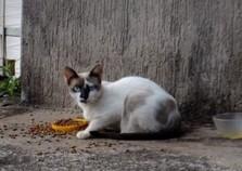 Homem atira contra gato em Umuarama e é preso