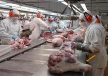 Instalação de frigorífico em Assis Chateaubriand gerará 5,5 mil empregos