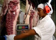 Com novo frigorífico em Assis, Paraná deverá se tornar líder em carne suína