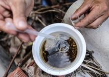 Índice de infestação do mosquito da dengue sobe para 6% em Douradina