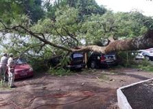 Parte de árvore cai e atinge viatura da Polícia Civil na Avenida Paraná