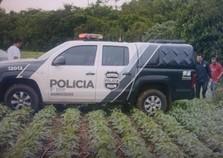 Ossada humana é encontrada em área rural de Foz do Iguaçu