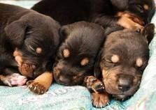 Mais um edição de Adoção de Cães acontece neste sábado (14) em Mariana