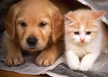 Abertas inscrições para pós em Clínica Médica de Animais de Estimação