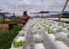 Excesso de chuva eleva o preço da alface e assusta consumidores