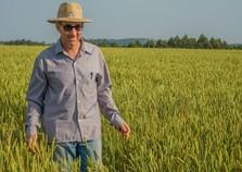 Show Rural traz tecnologia que diminui o tempo de cultivo do trigo
