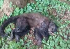 Morte de macaco em Cascavel acende alerta de febre amarela