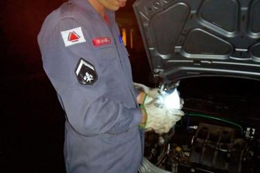 Bombeiros resgatam gato preso em motor de um automóvel