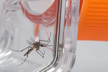 Casos prováveis de dengue em Andradas chegam a 37 em 2019