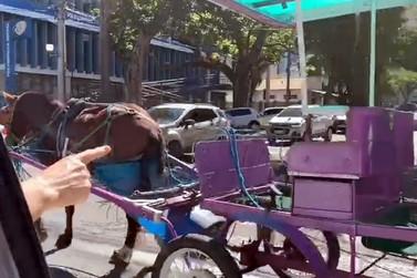 Charrete é flagrada sem condutor no centro de Poços de Caldas