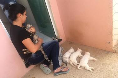 Gatos são mortos por envenenamento no Jardim Videiras
