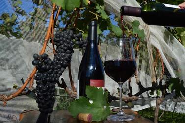 Andradas: mais de um século de tradição em vinhos