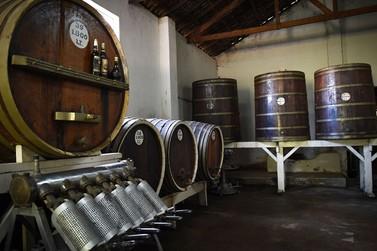 Vinhos Bertoli e Nau Sem Rumo: tradição centenária em Andradas