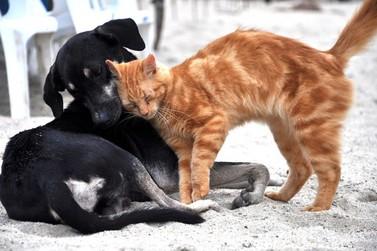 Vacinação antirrábica não será feita em animais da zona urbana em Andradas
