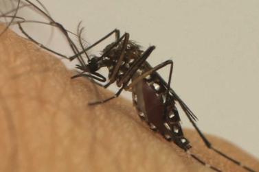 Andradas não tem casos prováveis de dengue nos primeiros dias de setembro