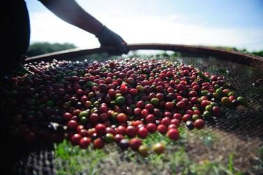 Safra de café deve fechar 2019 com queda, diz IBGE