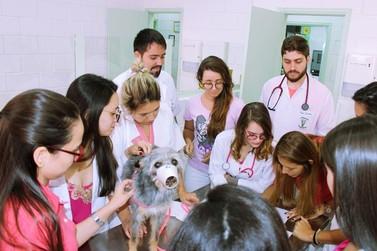 Hospital Veterinário realiza exames de câncer de mama em pets