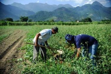 IBGE revela características do setor agrícola de Andradas