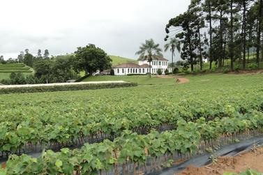 EPAMIG passa a integrar Comissão Técnica Brasileira da Vinha e do Vinho