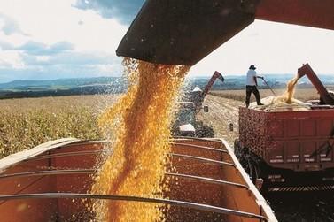 Minas Gerais tem previsão de maior safra de grãos desde 1976