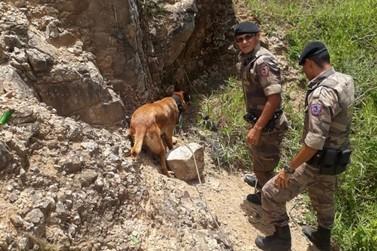 Cães farejadores reforçam o trabalho da Polícia Militar na região