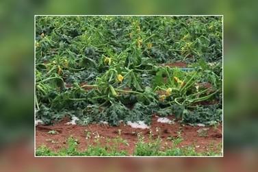 Emater divulga levantamento sobre danos causados por chuva de granizo