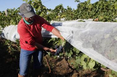 Onda de frio tardia pode trazer impactos para a agricultura  andradense
