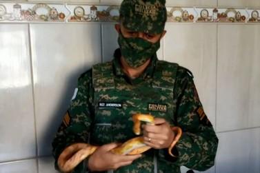 Policia apreende quatro cobras em uma casa em Santa Rita de Caldas