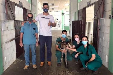 Animais recuperados pela Unifeob são devolvidos à natureza
