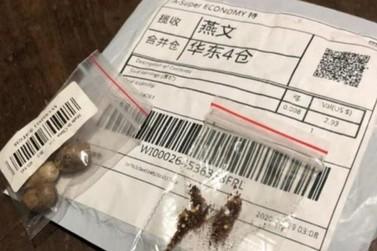 Emater emite alerta à população sobre possíveis sementes perigosas