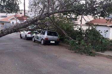 Vento forte derruba árvore na Vila Caracol em Andradas