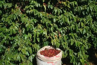 Seca pode comprometer a produção mineira de café em 2021
