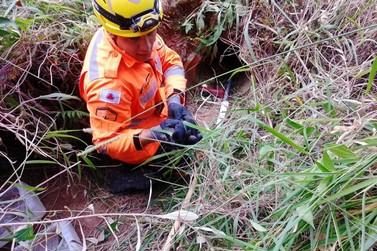 Corpo de Bombeiros resgata cadela e dez filhotes de dentro de manilha