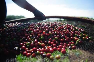 Pesquisa da Conab indica queda na produção de café nacional em 2021