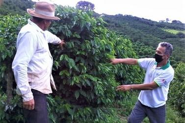 Andradas e região investem em marca coletiva de café vulcânico