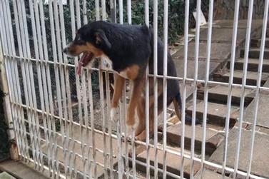 Corpo de Bombeiros resgata cão preso em portão em Poços de Caldas