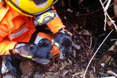 Corpo de Bombeiros salva filhotes de cachorro de cratera em Caldas